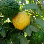 درمان بیماری ها با بالنگ و پرتقال