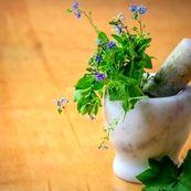 بهترین گیاهان و ادویه جات برای لاغری را بشناسید