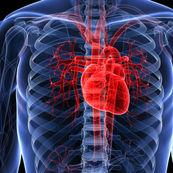 آنچه زنان باید در مورد بیماری قلبی بدانند