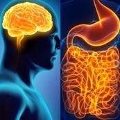 ارتباط بین روده و مغز
