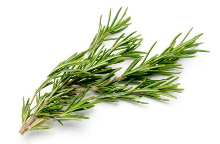 خواص دارویی گیاه مرزه چیست ؟