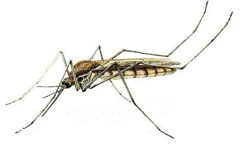 مشکلات پوستی ناشی از نیش حشرات و راه حل آن